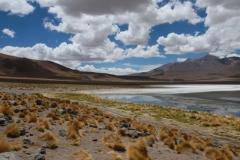 Laguna Colorada_0080