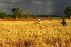 5. SunsetRain Landscape